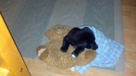 He's very small...the bear he's snuggling with is about 12 inches tall.